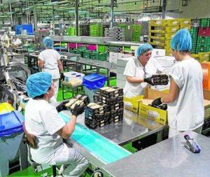 Línea de envasado de turrón blando y duro de la marca Hacendado para Mercadona, en la factoría principal de Sanchis MIra./FOTO ÁLEX DOMÍNGUEZ