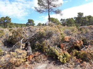 Troncos y restos de poda amontonados en los montes públicos de Vivens./FOTO MADE IN JIJONA