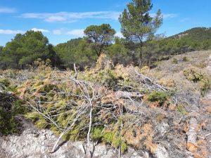 Estado en el que se halla la zona de Vivens, con troncos y ramas podados en los dos últimos meses en cortafuegos y junto al bosque./FOTO MADE IN JIJONA