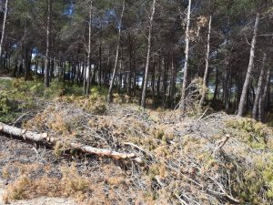 Restos de la tala y la poda de miles de pinos esparcidos por una amplísima zona de Vivens, en la Carrasqueta./FOTO MADE IN JIJONA