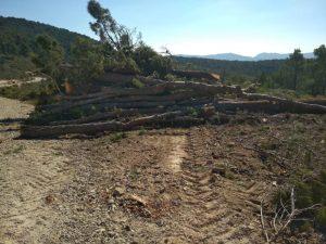 Un montón de troncos de pino limpios de ramas preparado para ser cargado, en Vivens./FOTO CONCEJALÍA MEDIO AMBIENTE