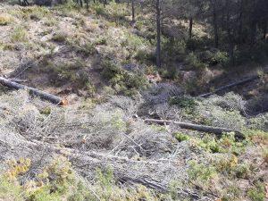 Troncos esparcidos en medio del monte, junto a las pinadas./FOTO MADE IN JIJONA