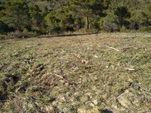 Así se ha quedado de limpia esta parcela del monte de Vivens tras la retirada de troncos y el triturado de ramas./FOTO CONCEJALÍA MEDIO AMBIENTE