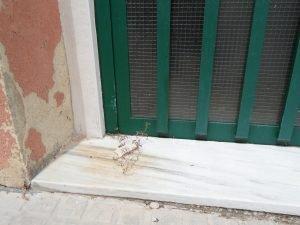 Puerta principal del albuergue, con un hierbajo que nace en la ranura del zócalo./FOTO MADE IN JIJONA