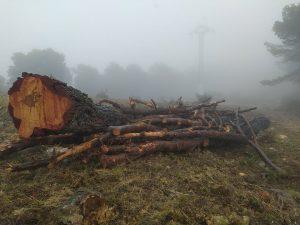 Troncos de pinos desbrozados y preparados para su extracción por las brigadas de Iberdrola en una de las zonas más devastadas de Vivens Carrasqueta, en imagen del martes./FOTO MADE IN JIJONA